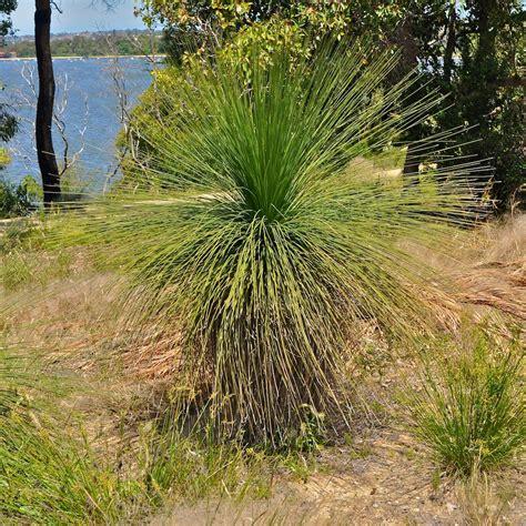 western australian tree western australian flora