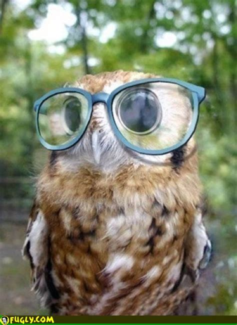 with pictures owl with glasses fugly