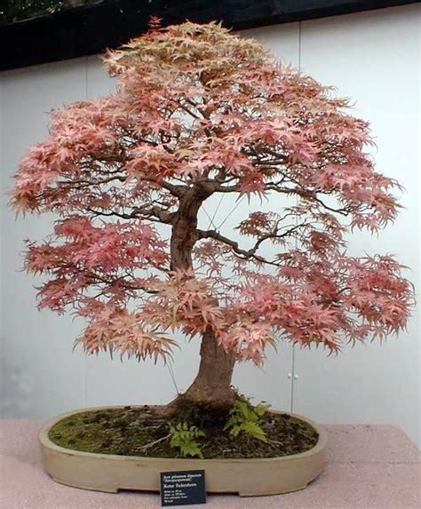 bonsai awaiting the muse