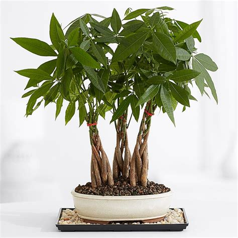 house for plants indoor plants house plants