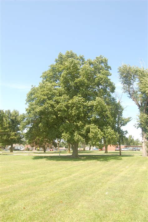 maple tree clay soil improving quality of improving heavy clay soils grimm s gardens