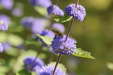 Der Bienenfreundliche Garten by Bienenfreundliche Pflanzen F 252 R G 228 Rten Und Balkone