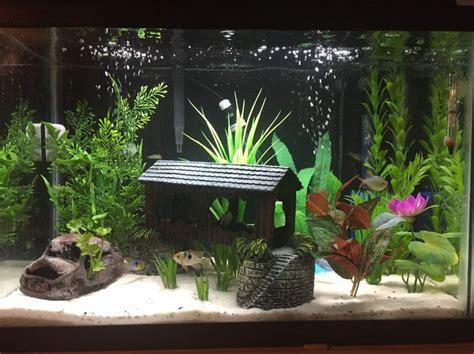 aquarium decoration ideas freshwater 25 best ideas about aquarium accessories on