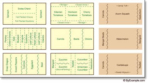 companion gardening layout companion planting vegetable garden layout