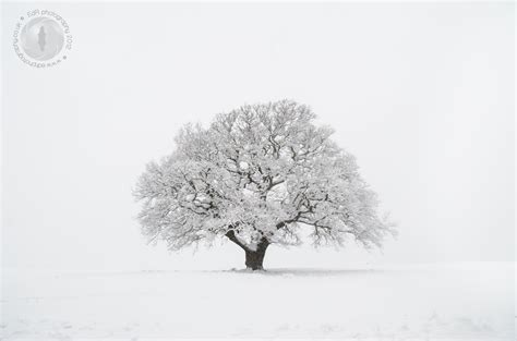 tree in the snow snow day in bristol an edr photography