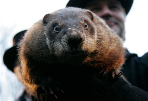 how to groundhog day what is groundhog day 2017 how is it celebrated and where