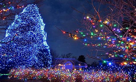 christmastree lights the 8 most beautiful trees in america american