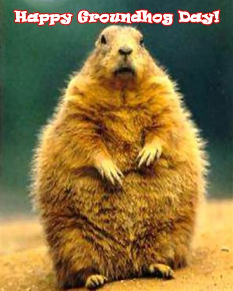 groundhog day happy day will he or won t he aroundustyroads