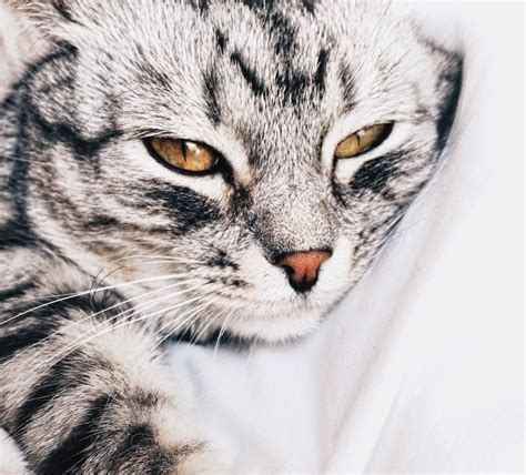 cat pictures cat pictures free images on unsplash