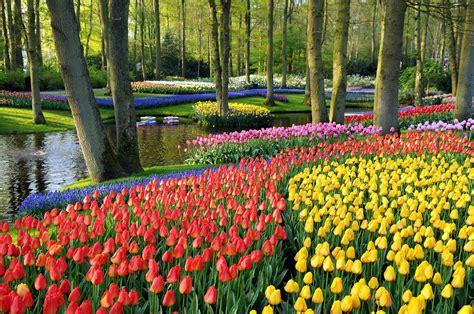 amsterdam botanical garden keukenhof botanic garden netherlands