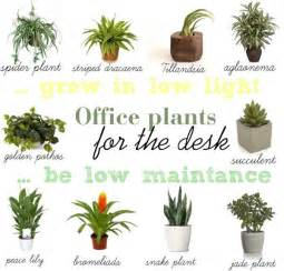 plants for the office 1000 ideas about office plants on interior