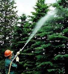 tree spray mountain valley tree spraying