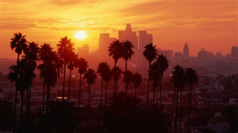 live trees los angeles los angeles sunset palm trees wallpapers hd desktop