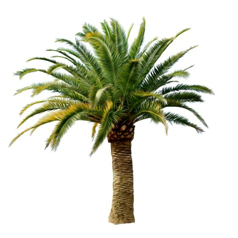 tree pic palm tree png images free pictures