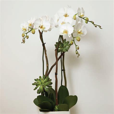 Calla Lily Home Decor contemporary orchid arrangement