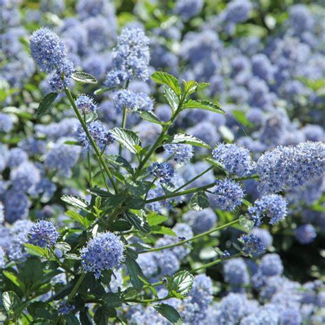c 233 anothe rant plantes et jardins