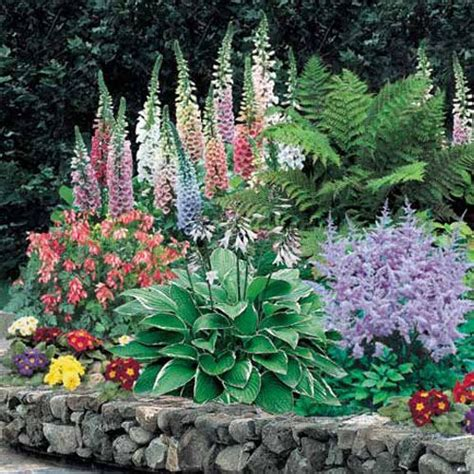 flowers shade garden best 25 shade garden plants ideas that you will like on
