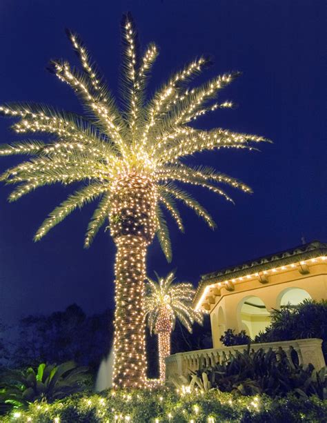 palm tree with lights illuminating trees in your san antonio landscape outdoor