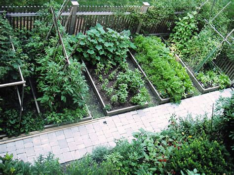 small garden layout how to grow your own food for increased security health