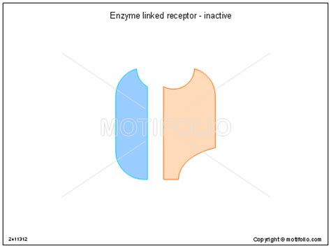 enzyme linked receptor inactive ppt powerpoint drawing