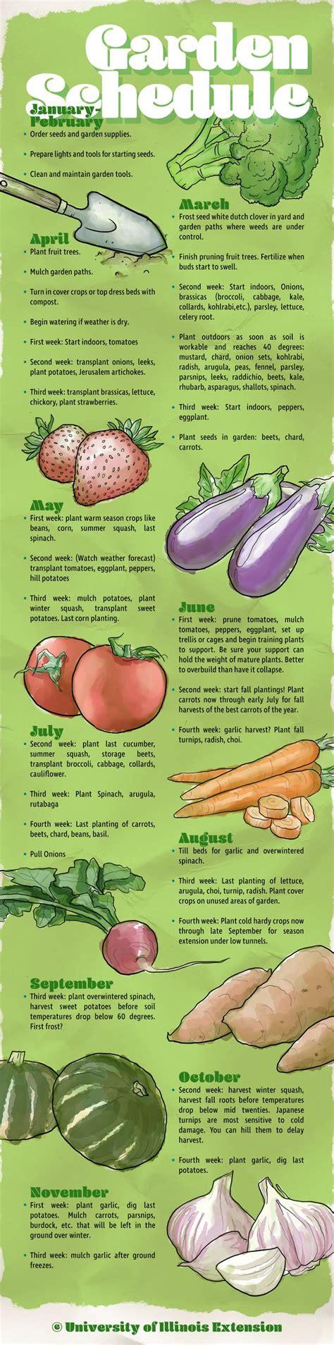 vegetable garden care 25 best ideas about vegetable gardening on