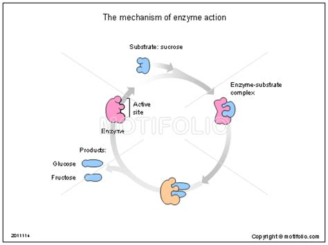 the mechanism of enzyme action ppt powerpoint drawing