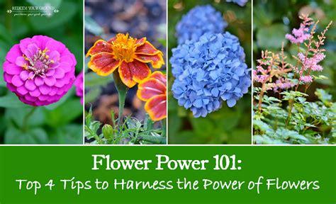 flower gardening 101 flower gardening 101 gorgeous flower gardening 101