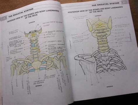 anatomy picture book learning anatomy