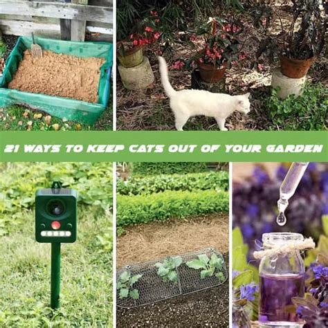 how to keep cats out of vegetable garden how to repel cats 21 ways to keep cats out of garden