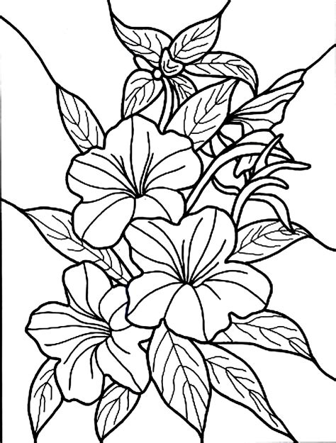 Free Printable Hibiscus Coloring Pages For