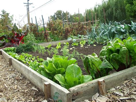 garden vegetable 38 homes that turned their front lawns into beautiful