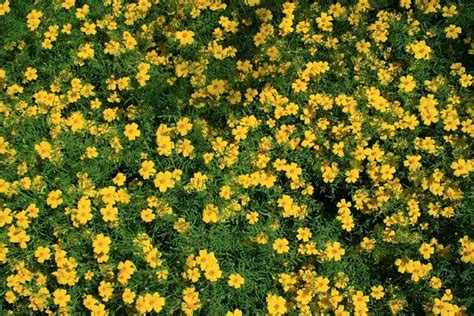 yellow garden flower free stock photos rgbstock free stock images yellow