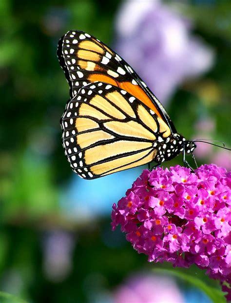 a butterfly butterflies siobhan baxter