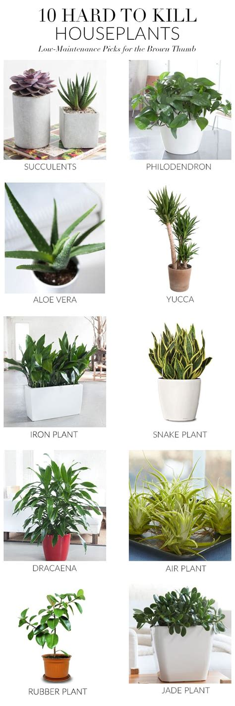 small plants that don t need sun 1000 ideas about indoor plants on best