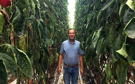 Der Gartenbau by Der Gartenbau In Mexiko Boomt