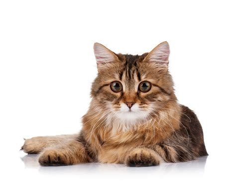 cat for adults looking after your cat tenerife news official