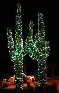 cactus with lights usa arizona saguaro cactus at places spaces