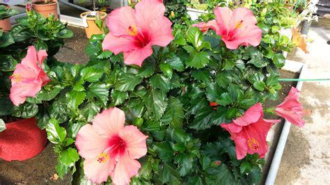 plantes d int 233 rieurs jardinerie p 233 pini 232 re 31270 villeneuve tolosane
