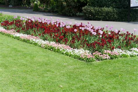 garden border plants flowers how to create borders with flowers and other plants