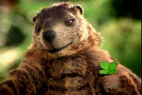 groundhog day jeopardy quotes you gus the groundhog wackbag