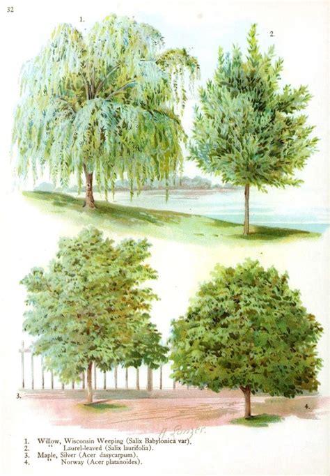 type of trees botanical trees leaves vintage printable at
