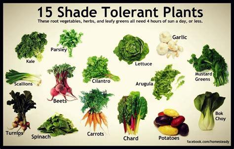vegetable garden plants list shade tolerant vegetables portland monthly