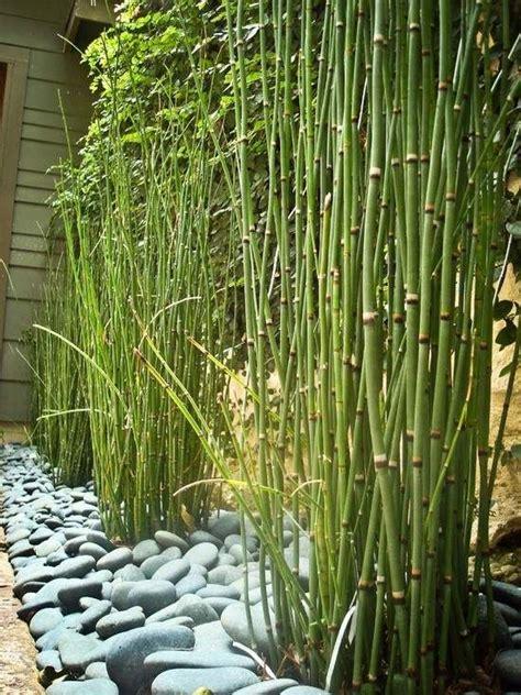 bamboo garden design ideas bambuspflanzen sorten arten garten kies steine gehweg