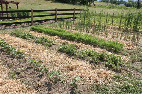 raised rows vegetable garden raised row gardening how to grow simple world