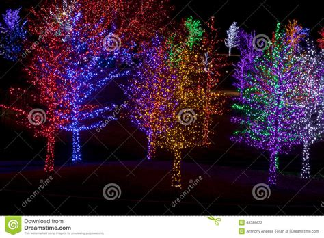 tree wrapped in lights trees wrapped in led lights for stock photo