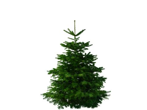weihnachtsbaum tanne tim tanne 183 erstklassige weihnachtsb 228 ume kaufen