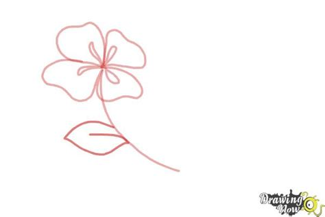 flowers step by step how to draw flowers step by step drawingnow