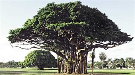 name of the tree indian tree names in trees of india