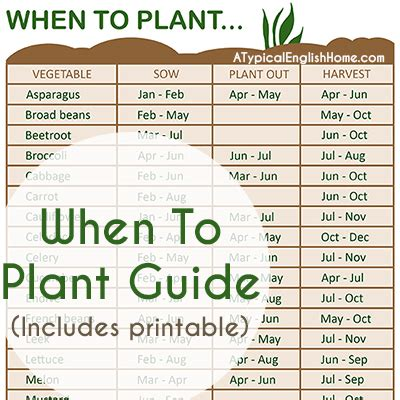 when to plant vegetable garden a typical home when to plant vegetables guide