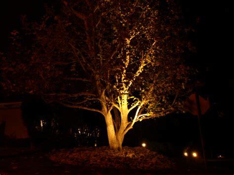 landscape lighting for trees landscape lighting wildrose gardening